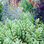 garden earthlove