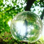 jjforum1624 treelove mindfulness naturelovers garden seattleigers