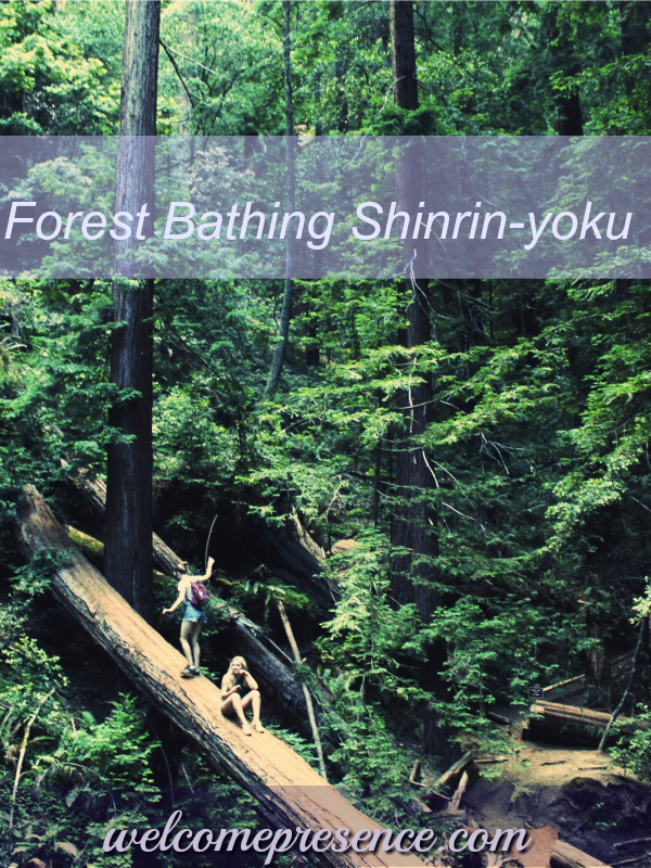 forest bathing shrine-yoku mindfulness