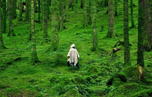 """Forest Bathing: Shinrin-yoku translates as """"taking in the forest atmosphere"""" or """"forest bathing""""."""